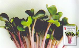 적콜라비 새싹 씨앗 (30g)