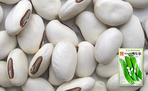 백도두 작두콩 씨앗 (5립)