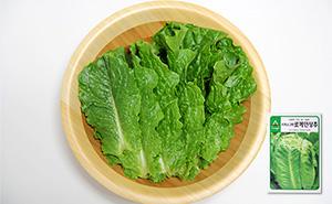 시저스그린 로메인상추 씨앗 (700립)