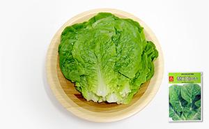 청치마 상추 씨앗 (3000립)