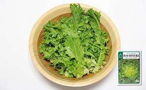 엔다이브(치커리 가을용) 씨앗 (700립)
