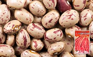 얼룩이 강낭콩 씨앗 (30g)